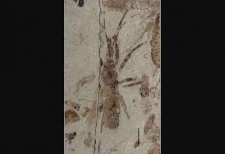 Ahli Paleontologi Temukan Fosil Serangga Pembunuh Lengkap dengan Genital
