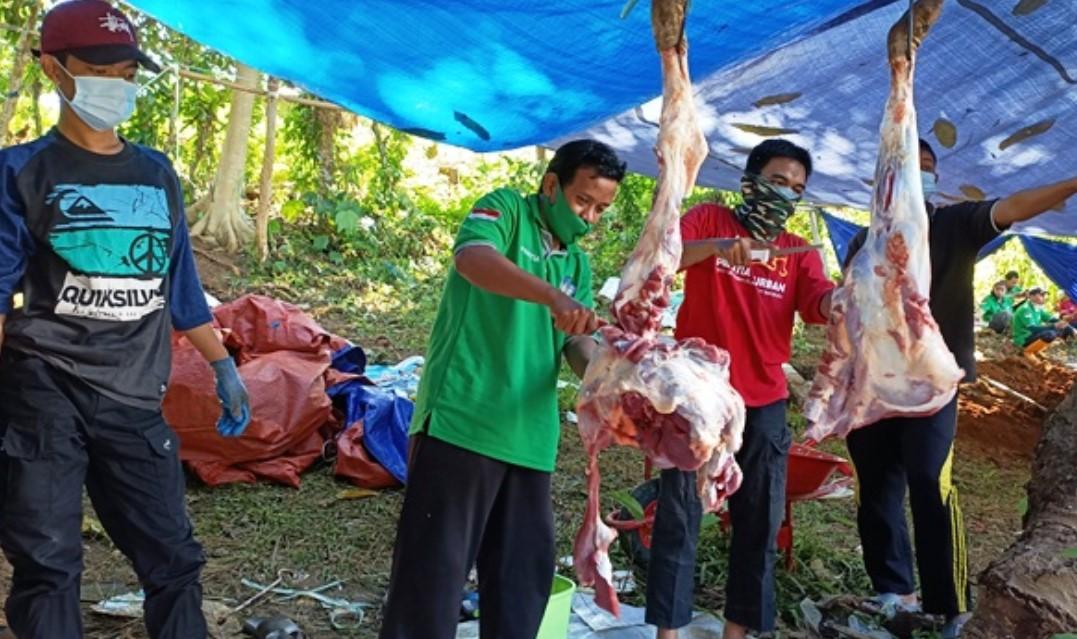 Laksanakan Amanah Umat, Wahdah Islamiyah Gelar Pemotongan Ratusan Hewan Kurban di Sulbar