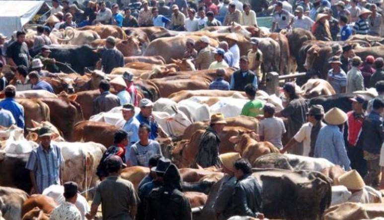 Menjelang Idul Adha, Politisi India Desak Pembelian Hewan Kurban di Negaranya Dilakukan secara Online