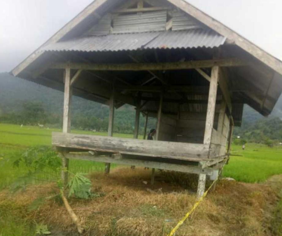 Seorang Suami di Sabbang Selatan Tega Tebas Istri Hingga Tewas di Pematang Sawah